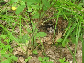 Ground nest