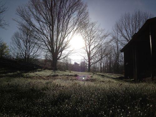 Beltanegrass2