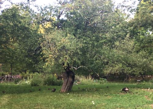Fairy apple turkeys sweat lodge