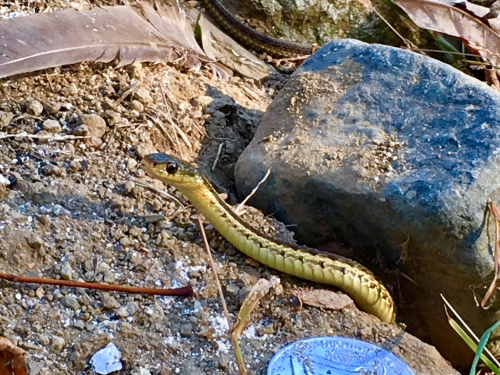 Snake on mound 1