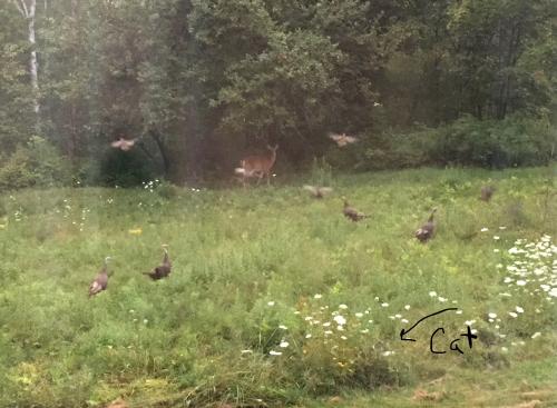 Deer turkeys cat arrow