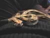 Little_guy_snake_diva_3